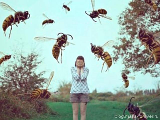 Пчёлы и люди