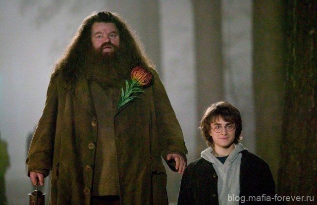 Гарри Поттер и кандидат от народа